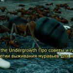 Empires of the Undergrowth 灌木叢下的螞蟻帝國生存策略初學者指南